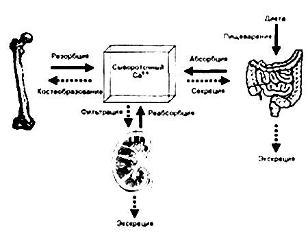 """В.И. Струков. Монография """"Актуальные проблемы остеопороза"""", 2009 год. Часть VII. Профилактика и лечение остеопороза"""