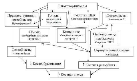 Схема патогенеза стероидного