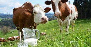 мифы о молоке в которые верят